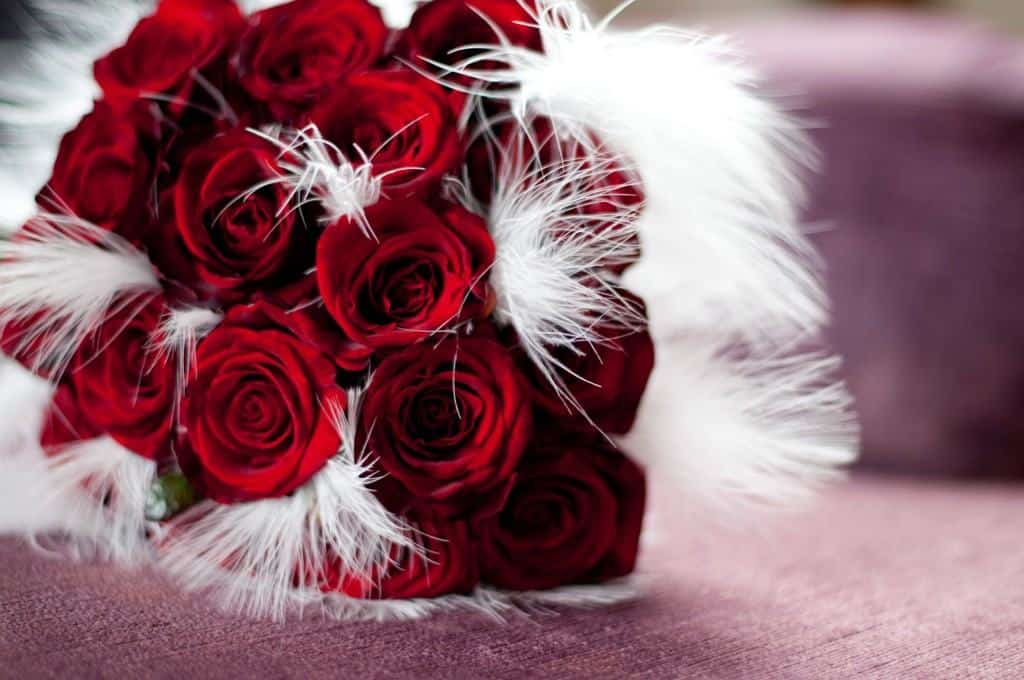 Brides bouquet of red roses and white feathers