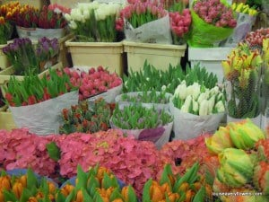 mixed tulips on display at the flower market