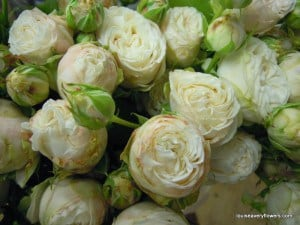 ivory double spray roses. Variety name: bombastic. Winter wedding