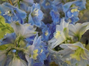blue flowers. Delphinium
