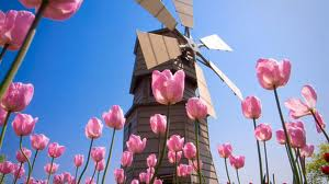 windmill with pink tulips