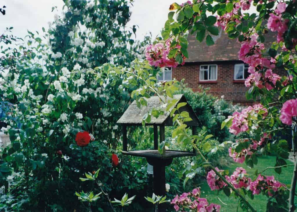 Childhood family garden