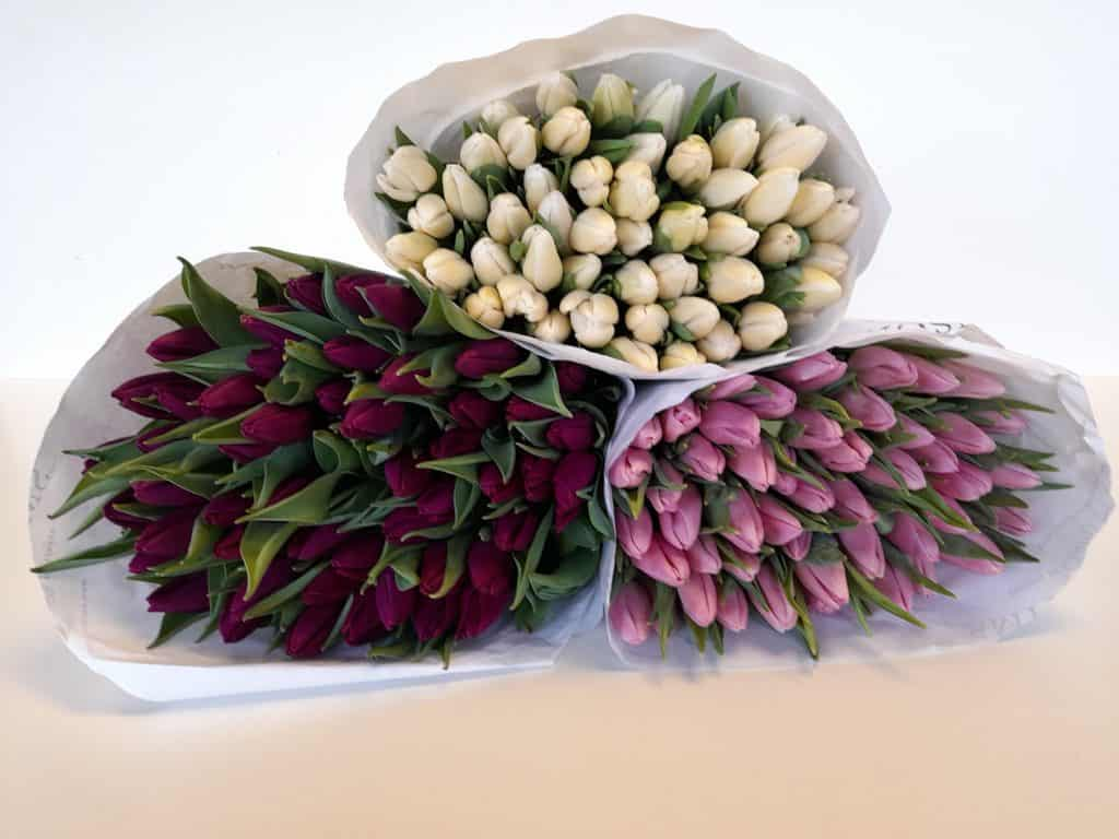Hampshire Mother's Day Flowers English grown tulips