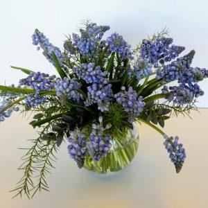 Muscari, blue Bouquet flower