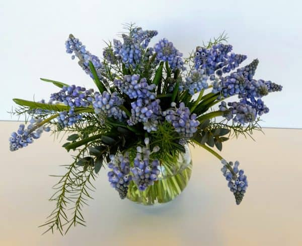 Muscari, blue Bouquet flower