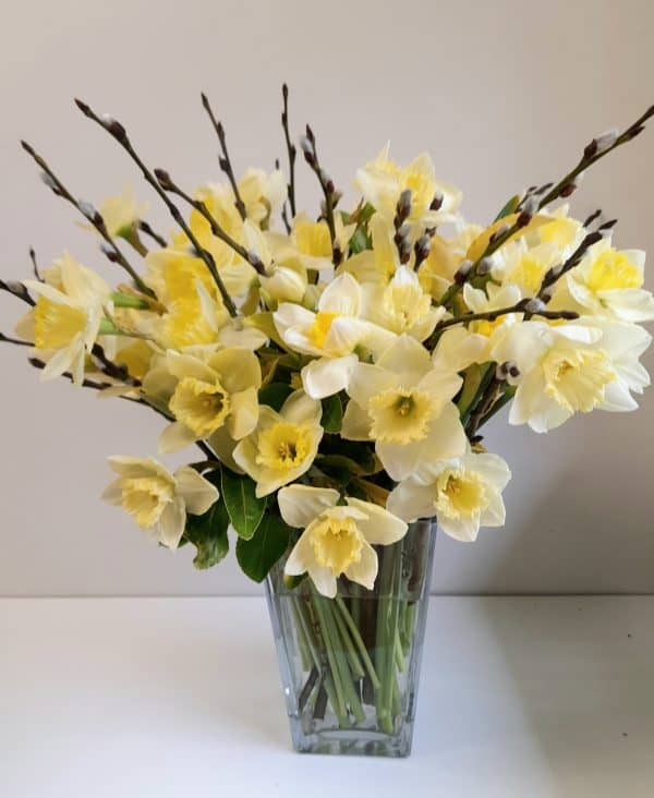 Cream Daffodils, Springtime flowers for an April Wedding,